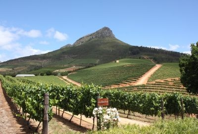 Cape Town Winelands & Garden Route - Vineyard